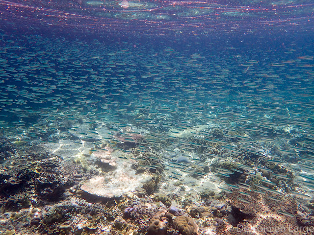 Pulau Menjangan - Bali