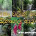 තුරුලතා වලින් වටවුණු - බෝධිනාගල ආරණ්යය 🙏 (Bodhinagala Forest Hermitage)