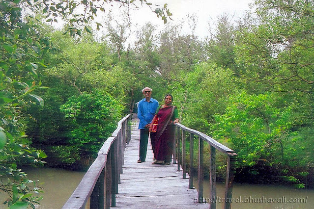 Board walk at Muthupettai mangrove