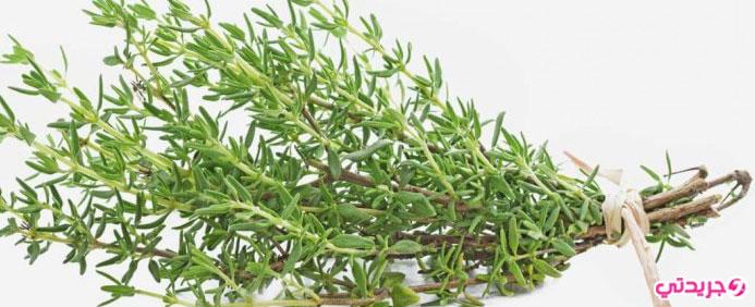 فوائد عشبة الزعتر