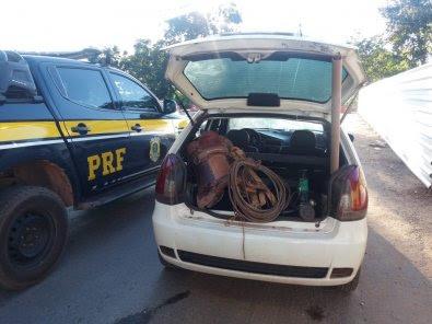 Quadrilha é presa por roubar gado em fazenda em MT