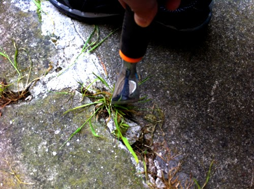 How to get rid of weeds on cement cracks | Xellow com