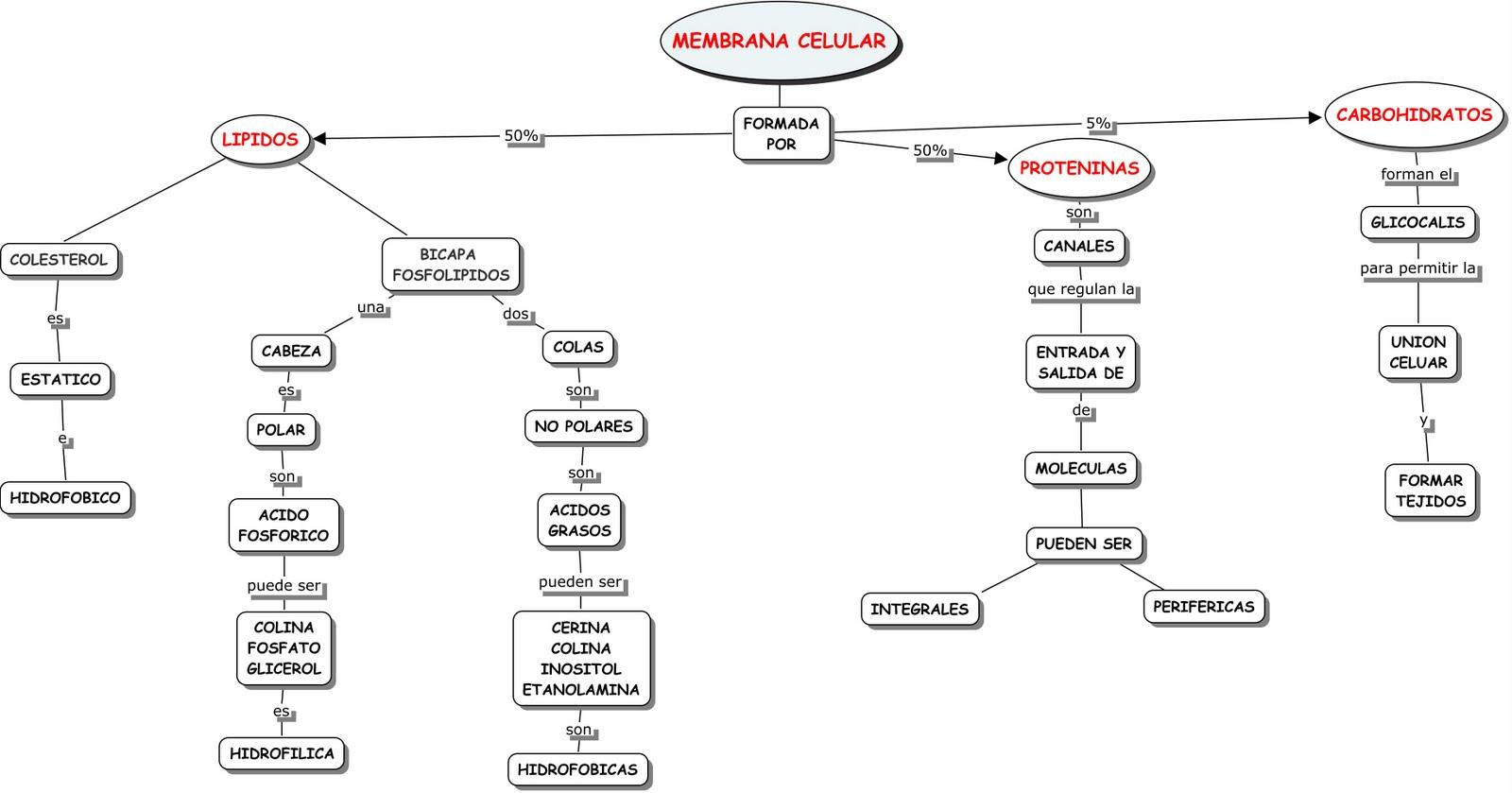 Membrana Plasmolema