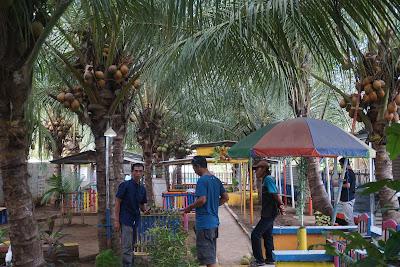 dukuhseti menjadi daerah penghasil kelapa kopyor terbesar di pati