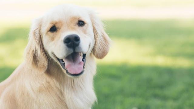 Απίστευτο: Ο σκύλος περνάει εφηβεία! Προετοιμαστείτε