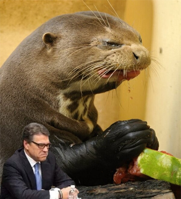 image of Rick Perry pouting pictured in the lower corner of a larger picture of an otter making a sour face while eating a watermelon
