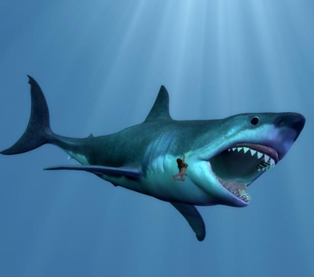 megalodon vs t rex who would win
