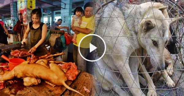 """Chinese people: """"Stop the Yulin Dog Meat Festival!"""""""