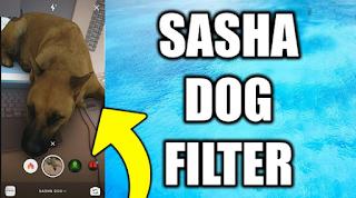 Dog filter instagram || How to get Sasha dog filter on Instagram