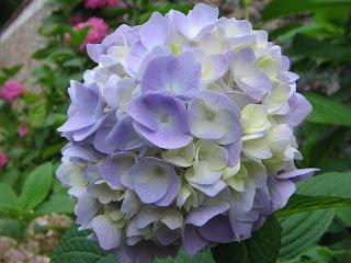 Flor en Benia de Onis (Asturias)