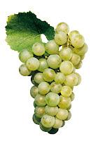 Resultado de imagen de chardonnay uva