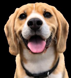 Download Dog PNG images