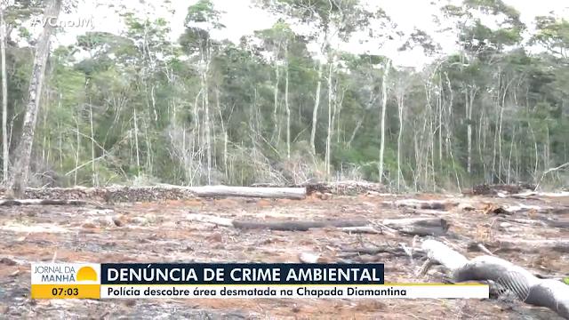 Polícia ambiental descobre desmatamento em área de preservação na Chapada Diamantina (Foto: Divulgação/TV Bahia)