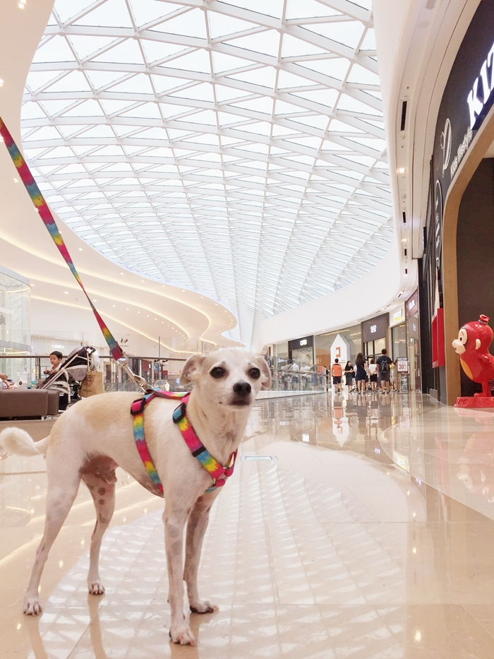 Korea's First Dog Friendly Mall - Starfield Hanam