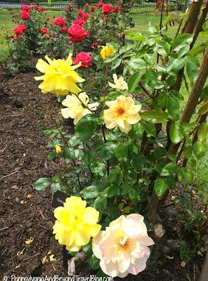 Hershey Gardens in Hershey Pennsylvania
