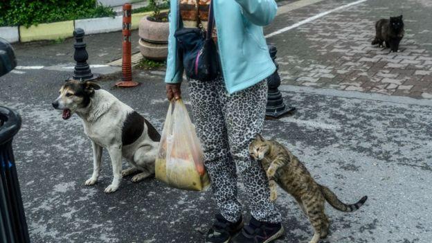 Masya Allah, Begini Nasib Ribuan Kucing di Turki Saat Pandemi Corona