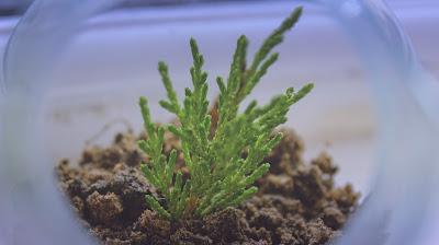 Plantita en recipiente de cristal