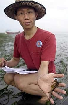 Johor Amazing Stories - Sea Horse