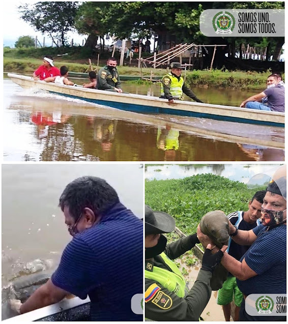 hoyennoticia.com, Rescatan manatí hembra recién nacida en Aguachica