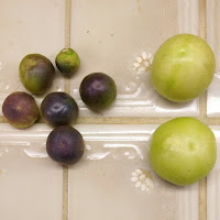 Two large green tomatillo fruit at right. Six small pale purple tomatillo fruit at left.