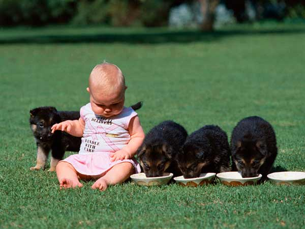puppies  Cães e Crianças Cuidasdos Importantes