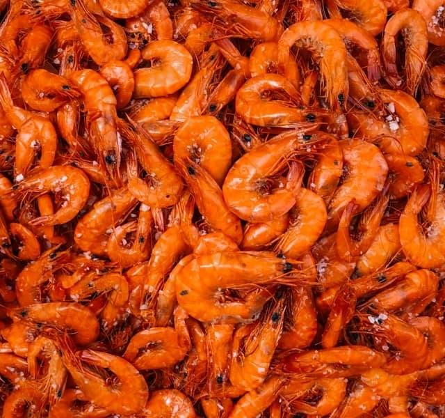 aprende ingles animal gambas shrimp naranja comida