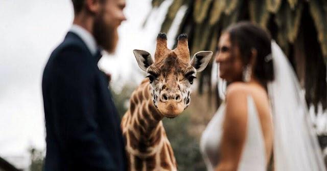 """ESPECIAL IMAGENS 2020 """"Fotos de casamento de 2020 parte 1"""""""