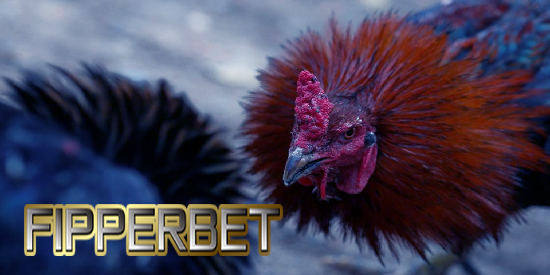 ayam aduan super