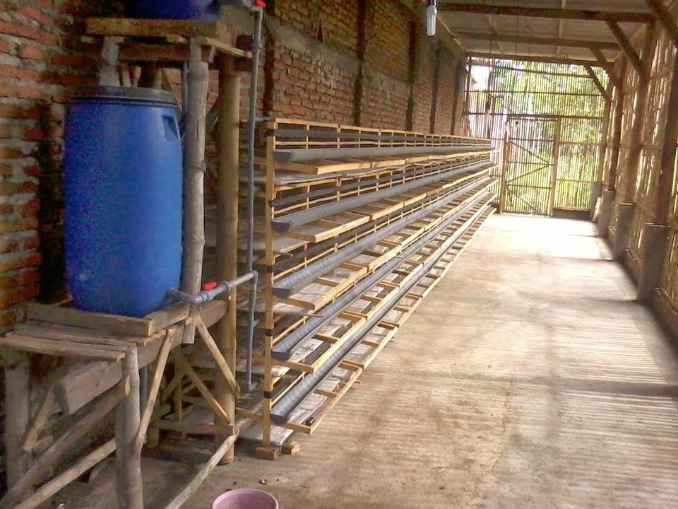 Ukuran Kandang Ayam Petelur Kapasitas 1000 Ekor - Tentang ...