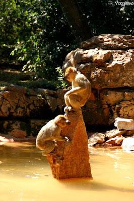 La Foret des Singes e i macachi di Barbarie presenti a Rocamadour