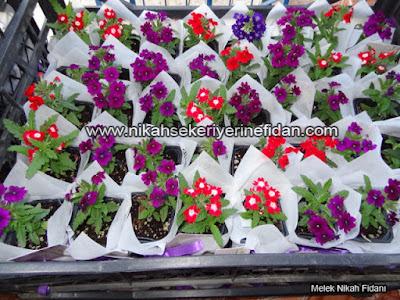 çiçek nikah fidanı İzmir Elif Başar - 4