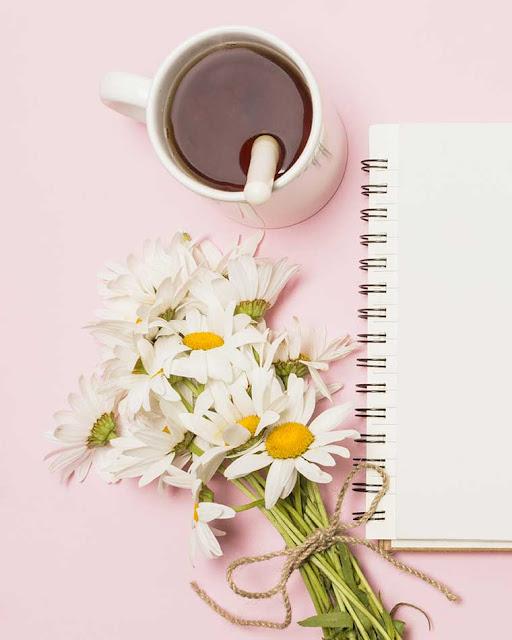 Blogueira: Cresça na internet