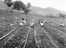 Indonesia pada masa penjajahan Belanda II
