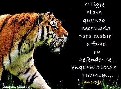 Tigres Animais Incríveis Com Frases