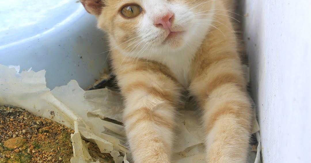 Fotografi Gambar Kucing Comel Arnamee Blogspot