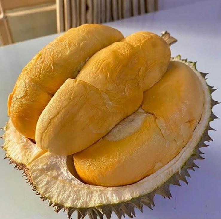 paket 4 bibit durian Montong bisa tabulampot Kalimantan Barat