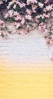 Gambar wallpaper wa warna warni