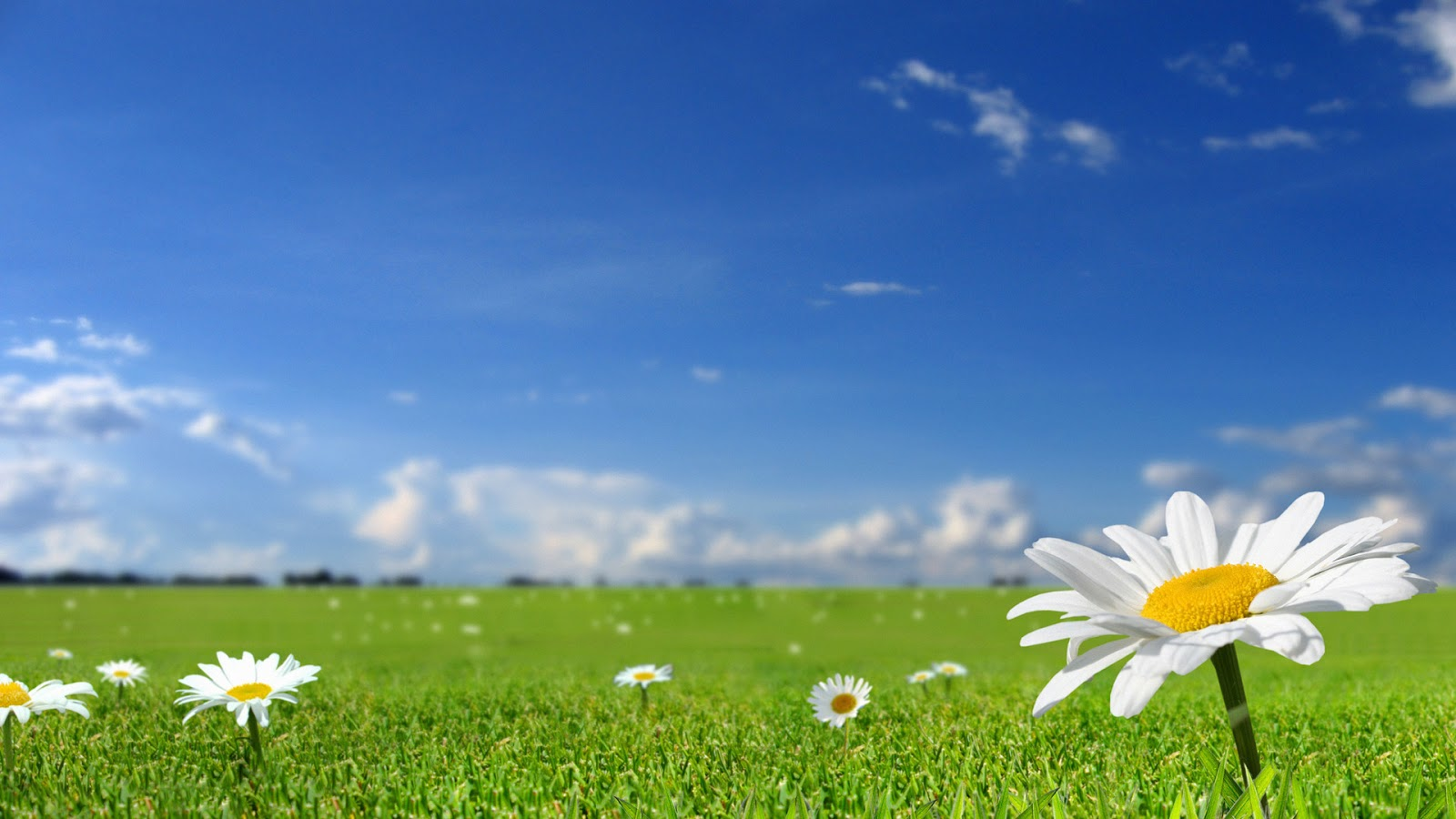 Hd Flower Backgrounds: Flowers HD Background Wallpapers