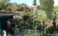 From the street - Diamond Head Community Garden, Waikiki, HI