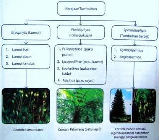 Ciri –Ciri dan Kelompok Tumbuh-Tumbuhan