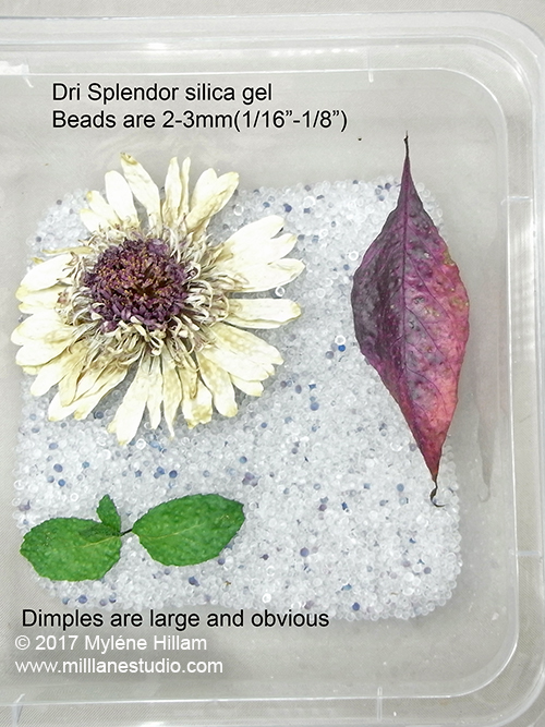 Large dimples spoil these dried botanicals. Use a finer silica gel or sand for a better result when drying.