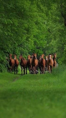 Đàn Ngựa May Mắn