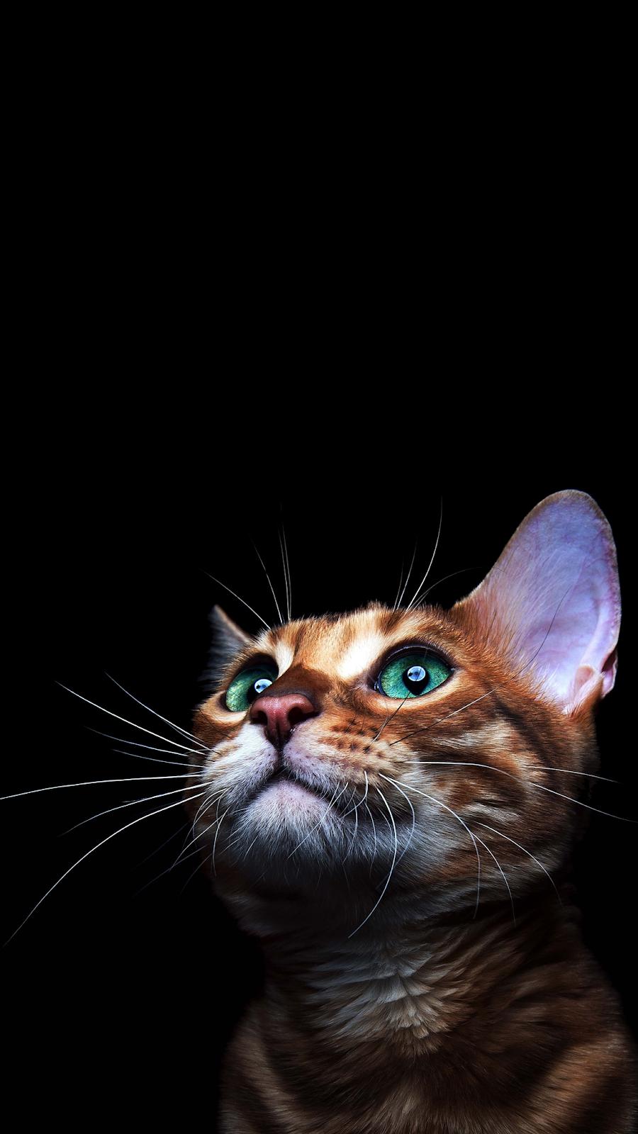 4K CAT AMOLED PHONE WALLPAPER