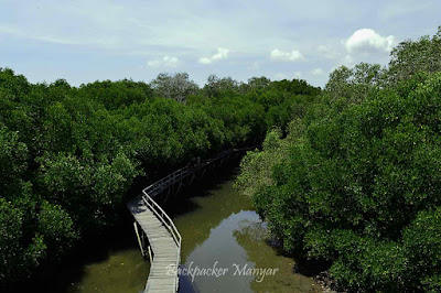 Indahnya Hutan Mangrove Taman Hutan Raya Ngurah Rai Bali dari atas - Backpacker Manyar