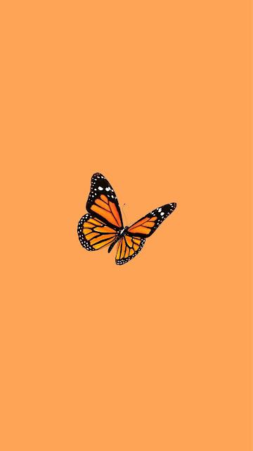 orange aesthetic wallpaper butterfly
