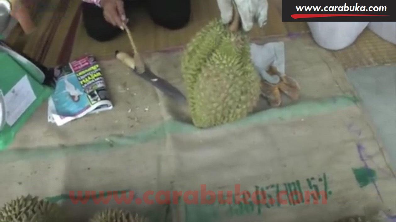 Tips Cara Memilih Durian Matang dan Manis 11