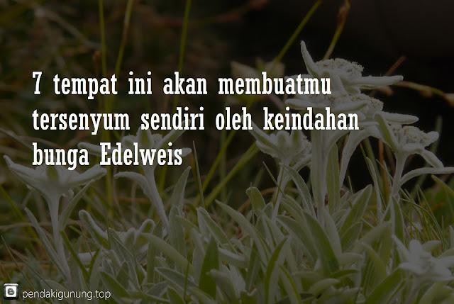 tempat menikmati bunga edelweis di indonesia