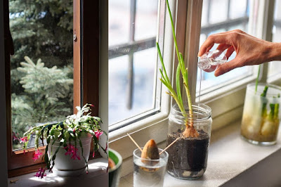 Light for Indoor Plant