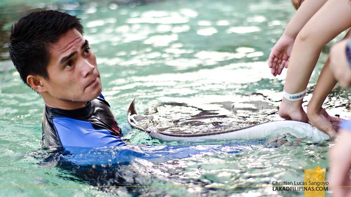 Manila Ocean Park Sharks and Rays Encounter