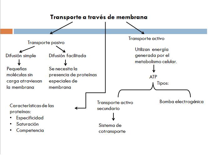 Membrana Celular Mapa Mental Imagui